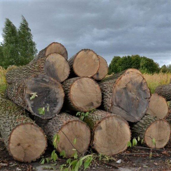 Напиляв дерев на 140 тисяч