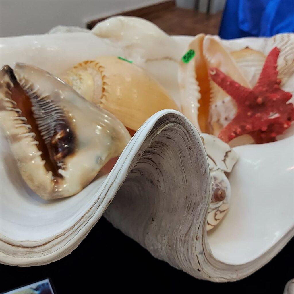 Тайны природы и морские чудеса: в музейном центре открылась уникальная выставка
