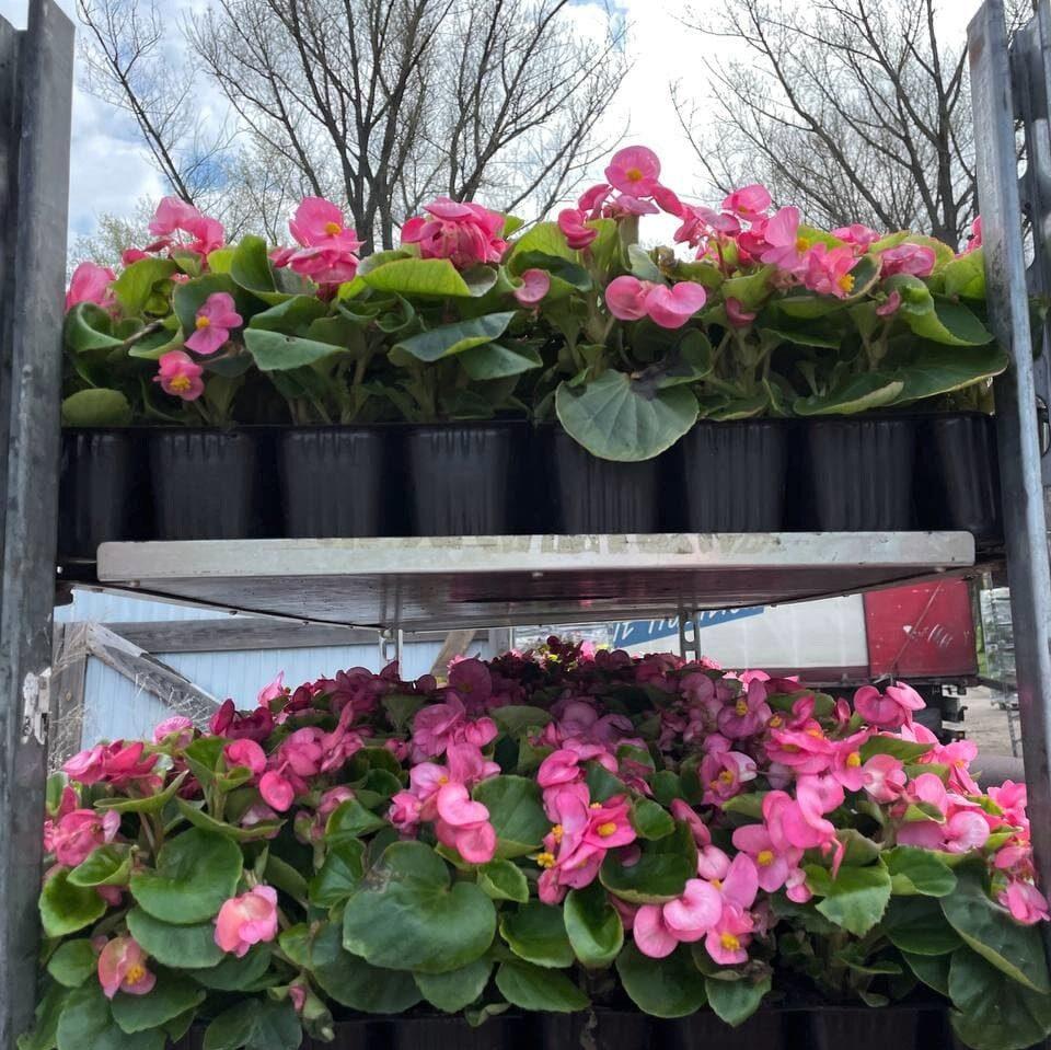 У парку Шевченка до 9 травня висадять 16 тисяч квітів